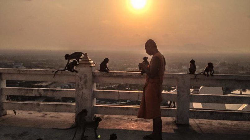 A monk feeding the monkeys at the Mirror Temple
